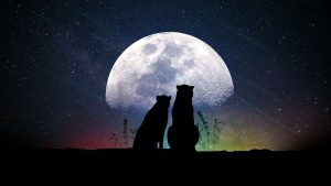 3840x2160 Wallpaper animals, moon, silhouettes, starry sky