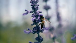 3840x2160 Wallpaper bee, insect, flowers, plant, macro