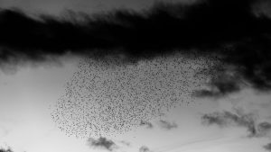 3840x2160 Wallpaper birds, flock, sky, clouds, black and white