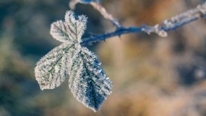 3840x2160 Wallpaper branch, leaves, frost, cold, winter