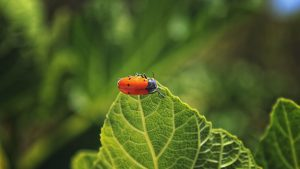 3840x2160 Wallpaper bug, leaf, macro, insect, red