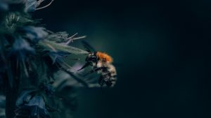 3840x2160 Wallpaper bumblebee, insect, flower, close-up