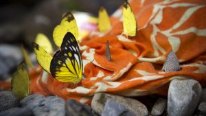3840x2160 Wallpaper butterflies, insects, fabric, macro