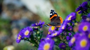 3840x2160 Wallpaper butterfly, flowers, wings, macro, insect