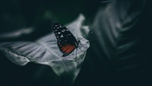 3840x2160 Wallpaper butterfly, insect, macro, leaf, blur, closeup