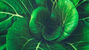 3840x2160 Wallpaper chinese cabbage, leaves, vegetable