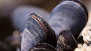 3840x2160 Wallpaper clams, mussels, shell, close-up