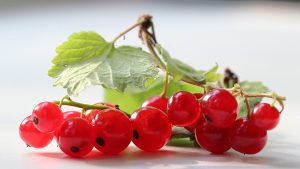 3840x2160 Wallpaper currants, branches, leaves, herbs