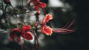 3840x2160 Wallpaper flowers, branches, buds, leaves