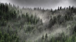 3840x2160 Wallpaper forest, fog, clouds, trees, spruce, coniferous