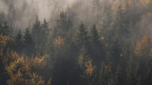 3840x2160 Wallpaper forest, fog, trees, pines, aerial view