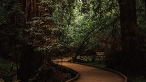 3840x2160 Wallpaper forest, trees, way, bend, nature, green