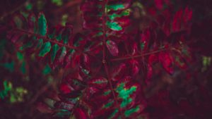 3840x2160 Wallpaper leaves, plant, autumn, carved