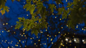 3840x2160 Wallpaper maple, leaves, branches, lights, macro