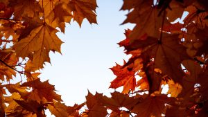 3840x2160 Wallpaper maple, leaves, branches, autumn, yellow, brown