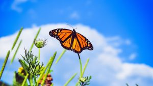 3840x2160 Wallpaper monarch butterfly, butterfly, close-up, wings, patterns