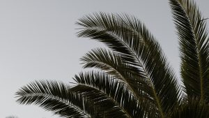 3840x2160 Wallpaper palm, branches, leaves, plant