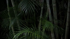 3840x2160 Wallpaper palms, trees, branches, plants, green