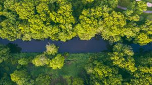 3840x2160 Wallpaper river, trees, aerial view, green