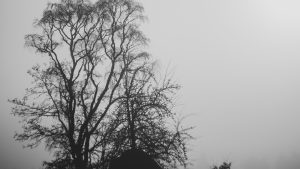 3840x2160 Wallpaper trees, branches, silhouettes, black and white, bw