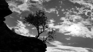 3840x2160 Wallpaper trees, silhouettes, cliff, black and white, black