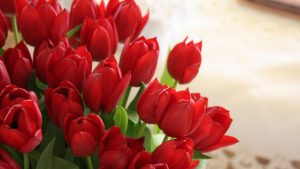 3840x2160 Wallpaper tulips, flowers, bouquet, red, beautifully